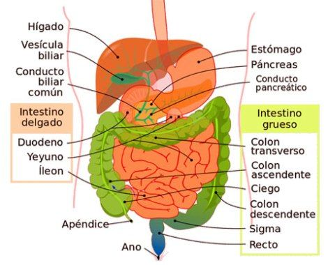 tratamiento y sintomas del cancer de colon y recto